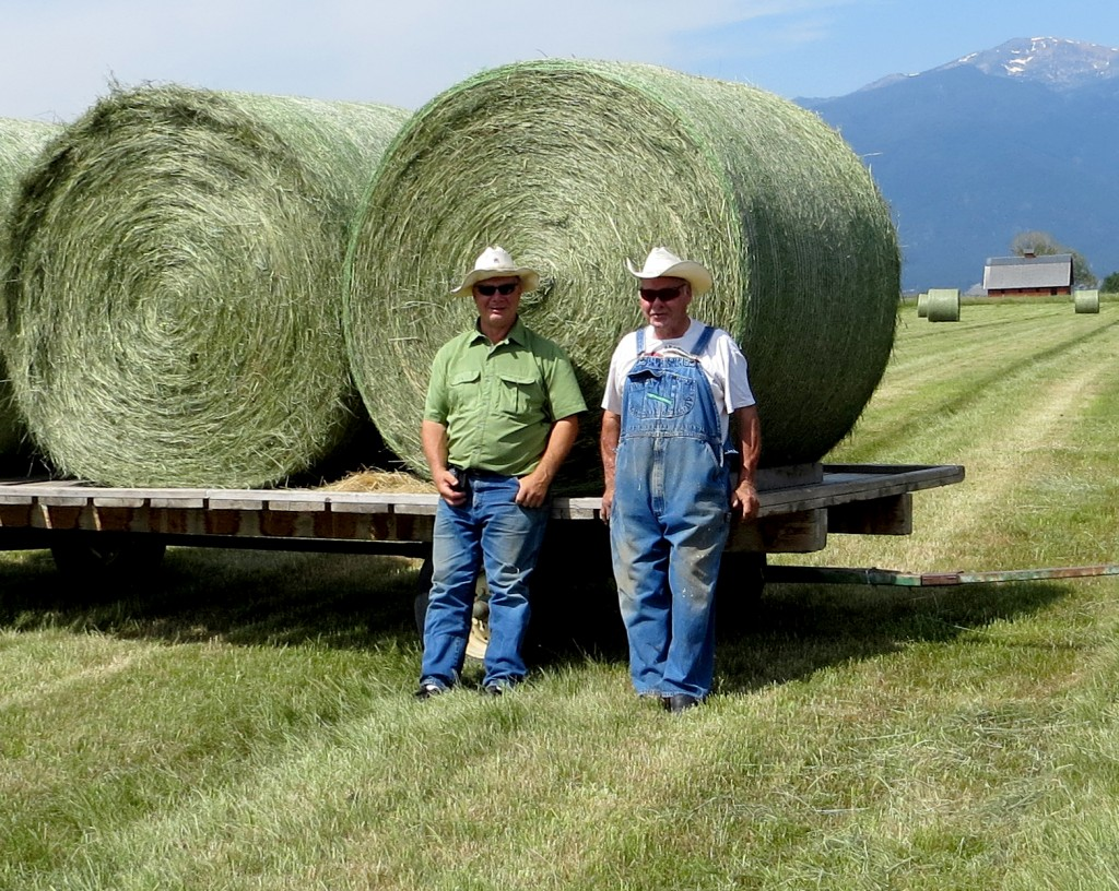 Boys and Hay