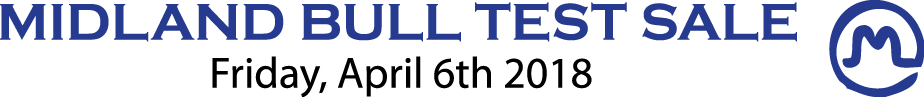 Midland Bull Test Sale; Flying AJ Ranch, Angus Bulls for Sale, Montana Angus Bulls for Sale