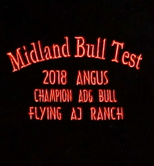 Midland 2018 Angus Champion ADG Bull - Flying AJ Ranch