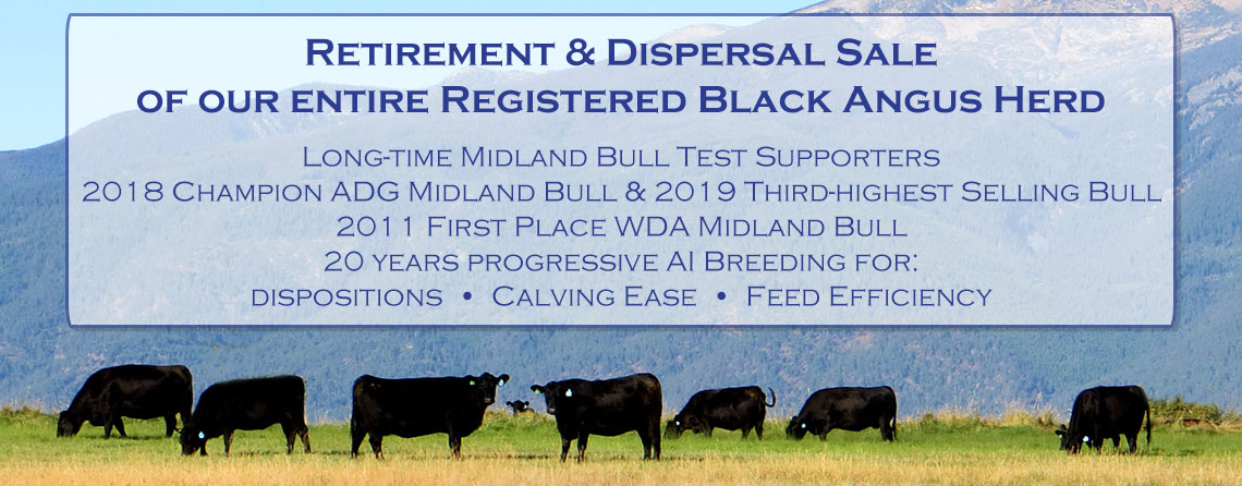 Black Angus Dispersal Sale, Ranch retirement